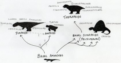 A very crude evolutionary tree. The word clouds around the ends of each of the branches represent different terms and animals associated with the taxonomic grouping.