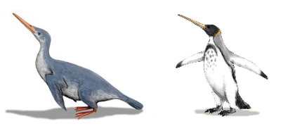 Left: Waimanu manneringi, Right: Icadyptes salasi, Artwork by Nobu Tamura